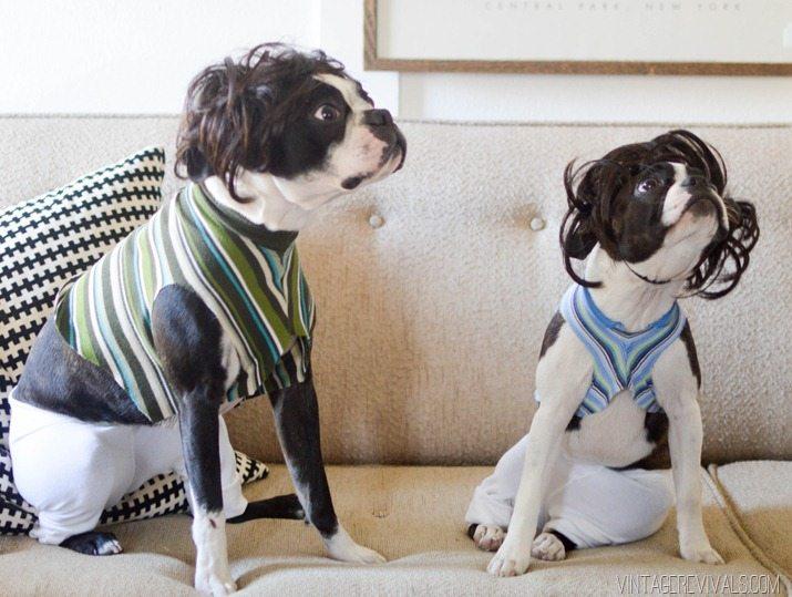 Jimmy Fallon Tight Pants Dog Costume-10