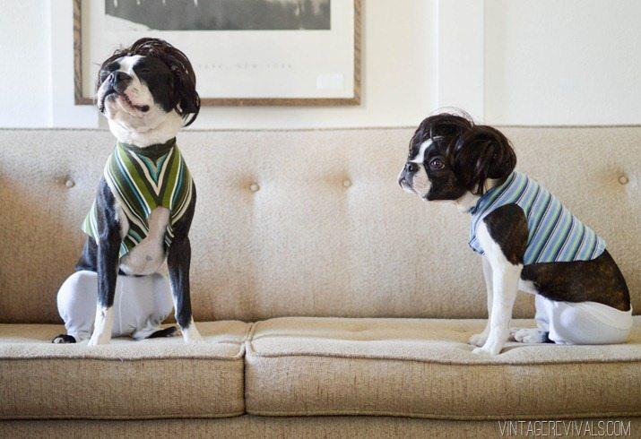 Jimmy Fallon Tight Pants Dog Costume-11
