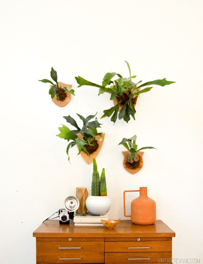 How to Mount and Care For a Staghorn Fern
