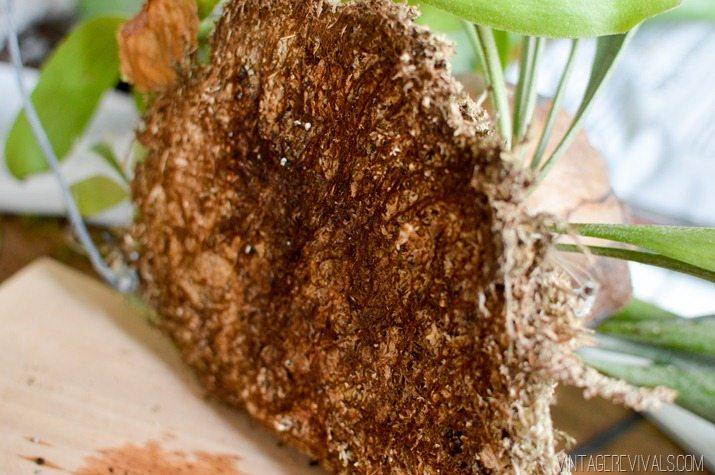 Backside of a Staghorn Fern