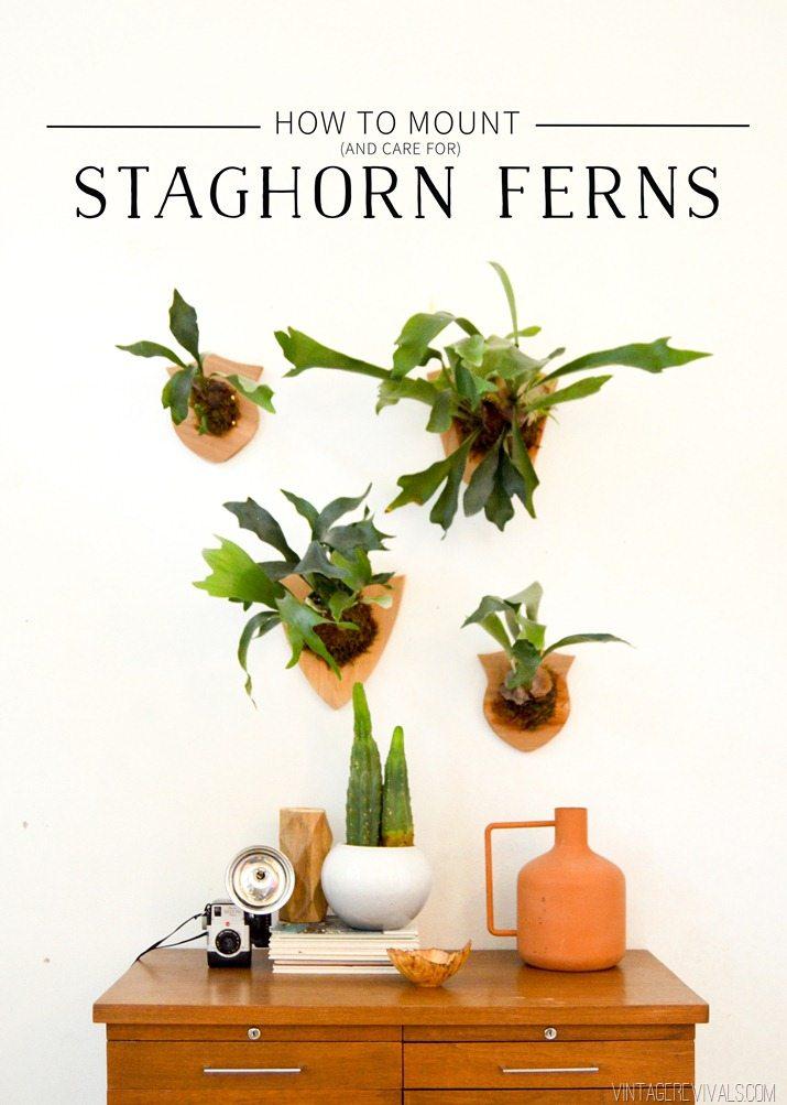 how to mount and care for a staghorn fern vintage revivals. Black Bedroom Furniture Sets. Home Design Ideas