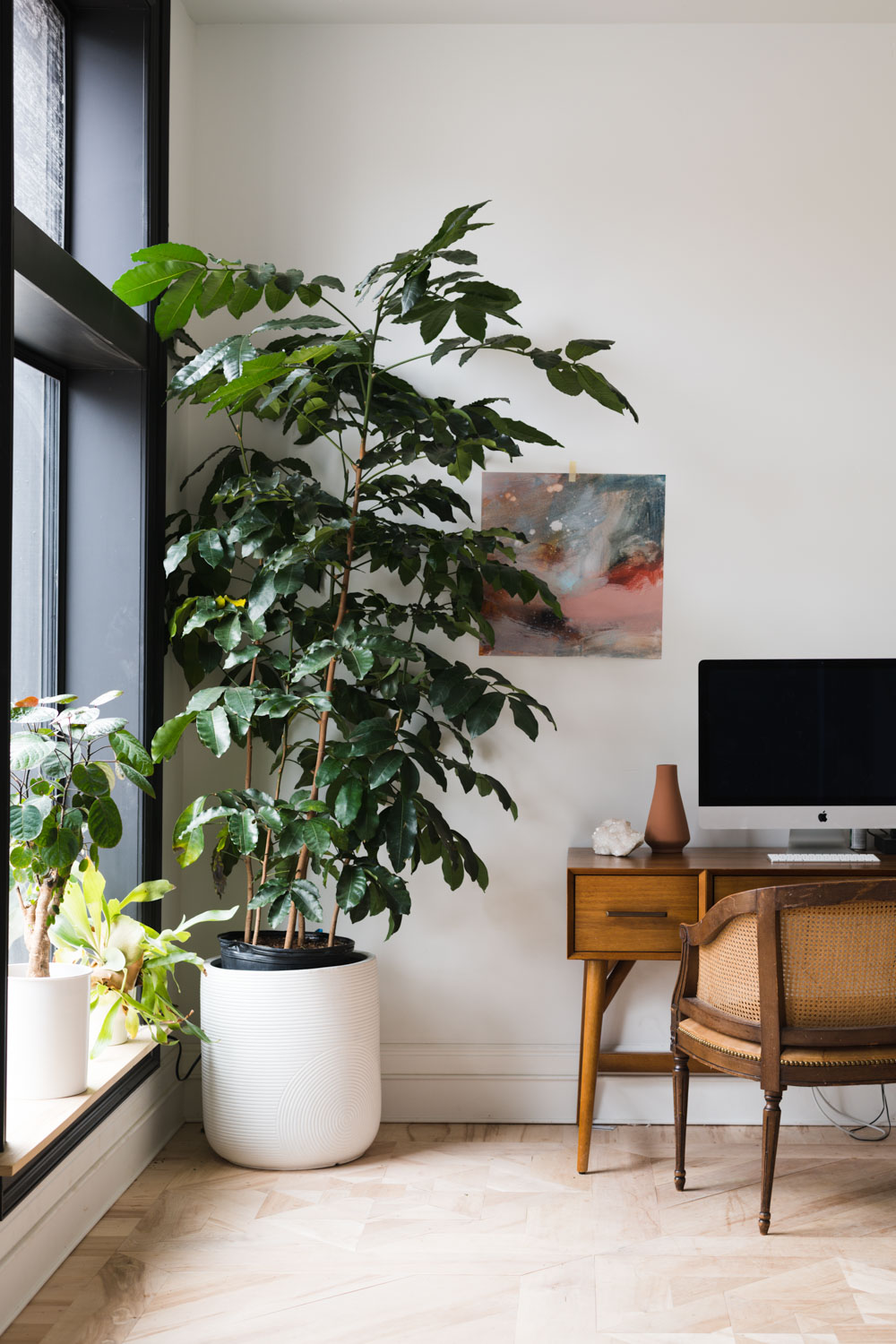 A Complete Guide To Lighting For Your Indoor Plants Quiz Vintage Revivals