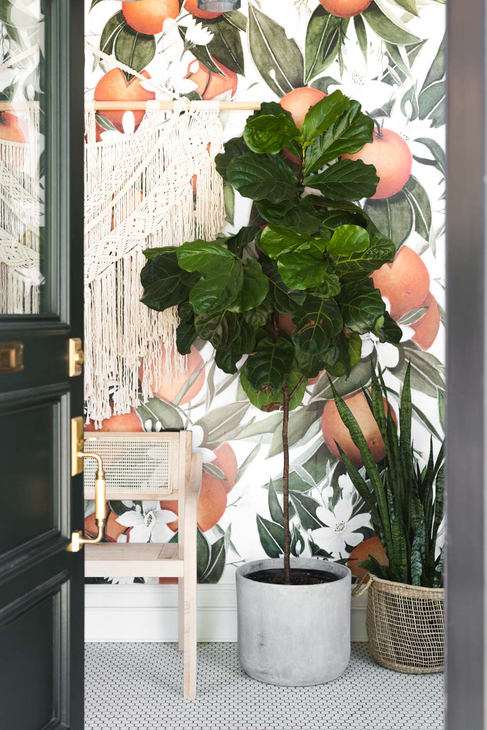 The Complete Guide To Caring For A Fiddle Leaf Fig Vintage